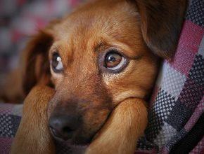 kutya gyomorrontás